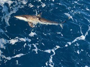 fishing in Ft Lauderdale